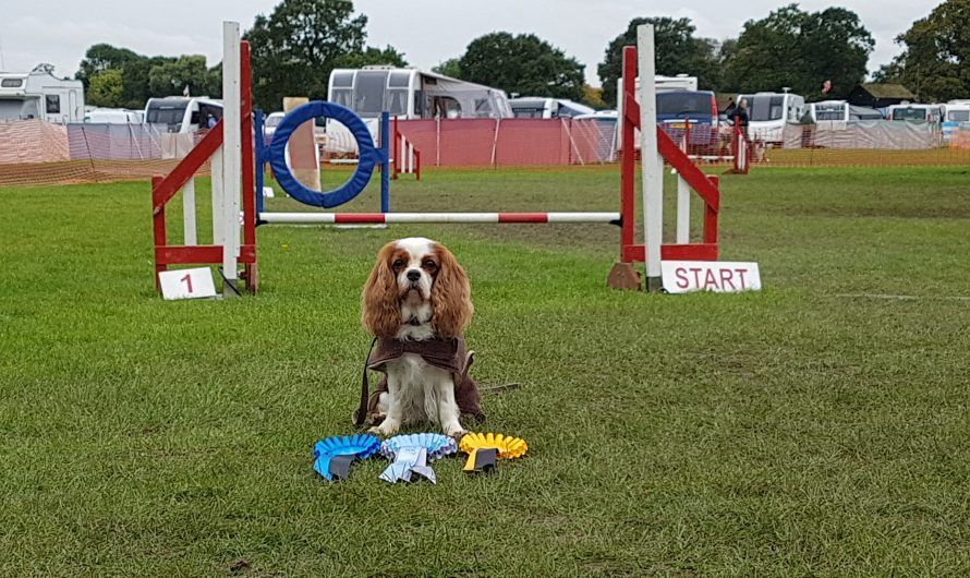 Hetty at Dog Vegas Agility