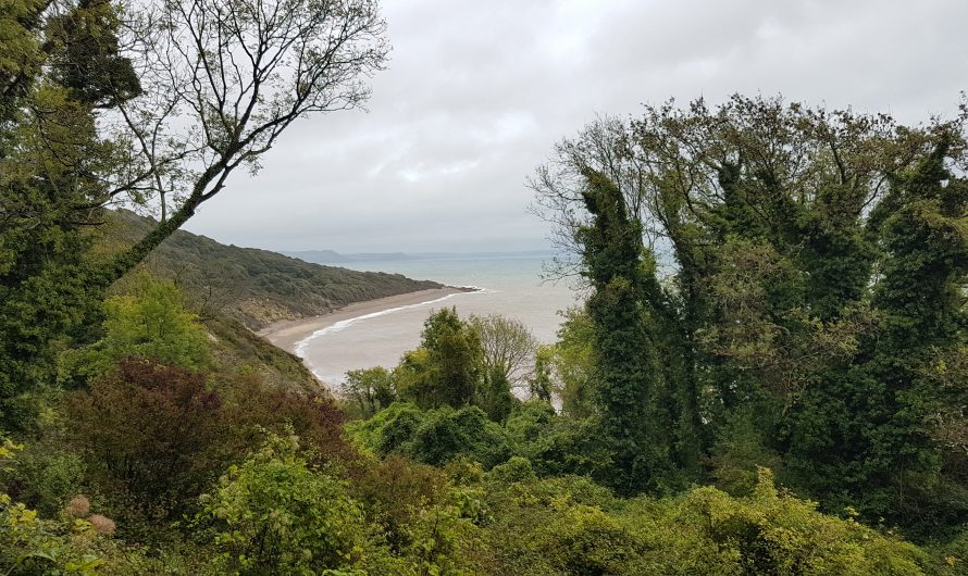 South West Coast Path: Seaton to Undercliffs (mid-way)